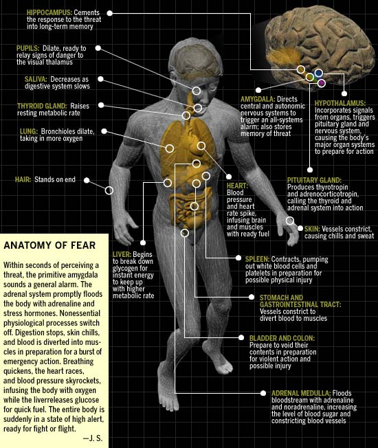 Anatomy of Fear, taken from www.discover.com